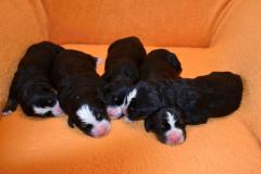 7.9.2019 Huráá narodily se nám 4 holčičky a 1 kluk