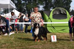 bernsky-salasnicky-pes-mlada-boleslav-2018-2