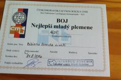 bernsky-salasnicky-pes-mlada-boleslav-2016-2