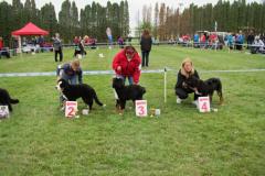 bernsky-salasnicky-pes-prvni-vystava-1