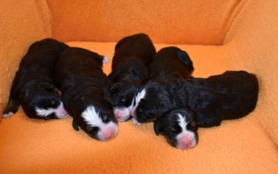 7.9.2019Huráá narodily se nám 4 holčičky a 1 kluk